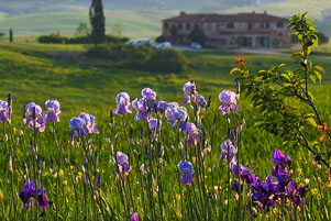 070422_052_Val-d'Orcia.jpg