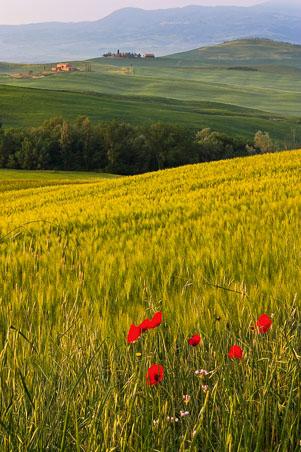 070425_013_Val-d'Orcia.jpg